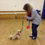 Puppy Dog Training Bramfield Hunsdon and Watton at Stone