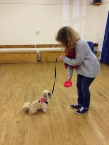 Puppy Dog Training Bramfield Hunsdon and Watton at Stone